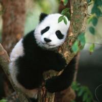Luxury China Tour - China Classical Highlights
